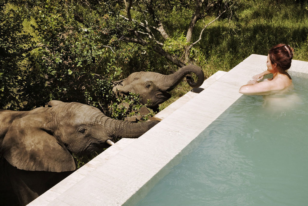 Royal Malewane and Africa Lodge-Luxury African Safari