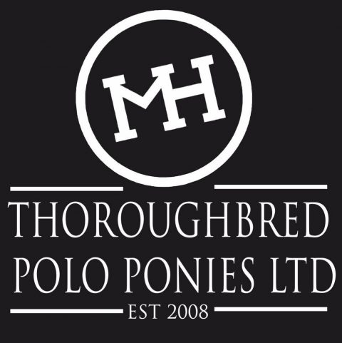 THOROUGHBRED POLO PONIES